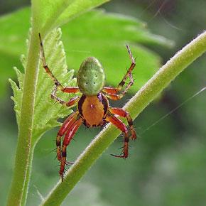 Насекомые в саду пауки