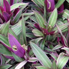 Растения для ленивых. Комнатные цветы