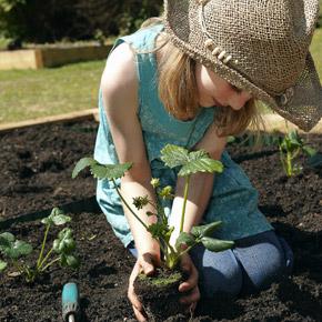 Календарь садовода. Июль — основные работы в саду