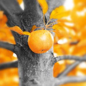 Календарь садовода. Октябрь — основные работы в саду