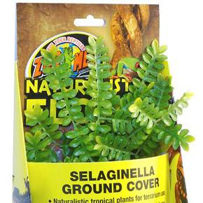 Селагинелла: уход, выращивание