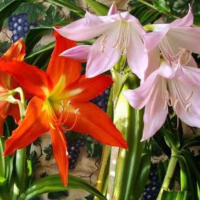 Комнатные цветы. Календарь работ на октябрь