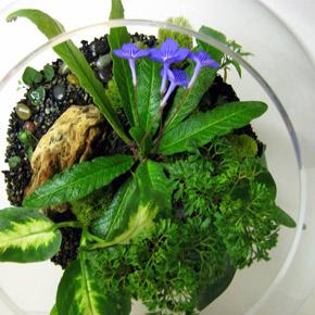 Флорариум. Размещение растений, уход, дизайн