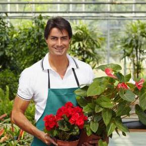 Зимовка комнатных растений