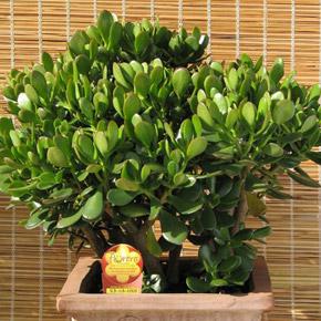 Растения для холостяка