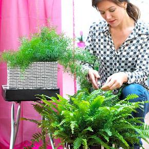 Весенняя обрезка растений
