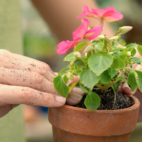 Какие растения способны ароматизировать и освежить воздух?