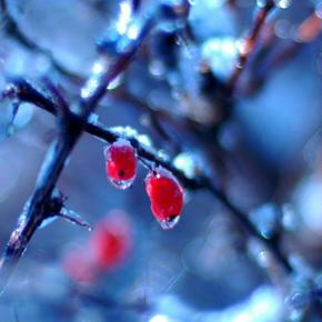 Январь. Календарь садовода-огородника