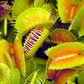 Растения хищники в доме